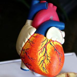 blodprøve for kolesterol og glukose